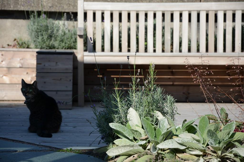 Christina Fuchs roof garden cat