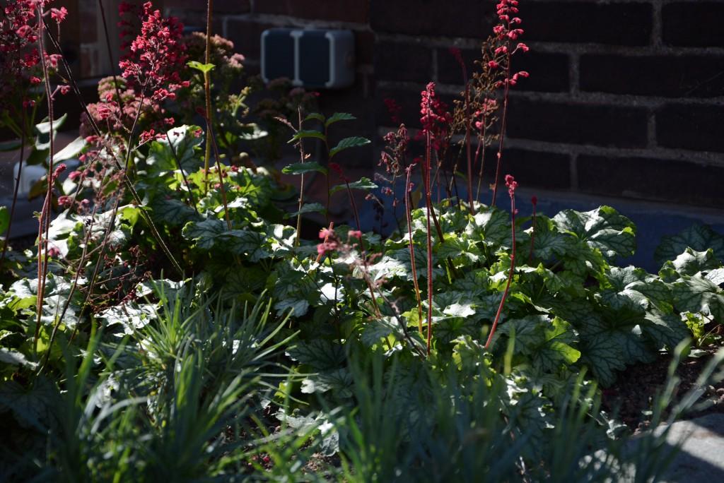 Christina Fuchs roof garden delights