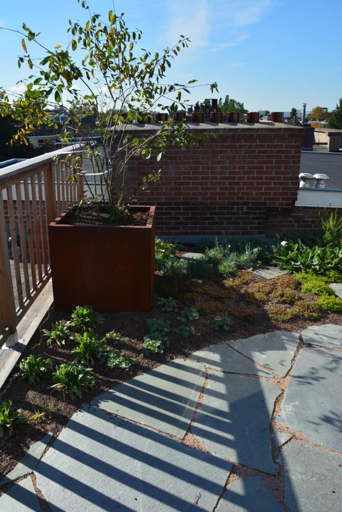 Christina Fuchs roof garden tree