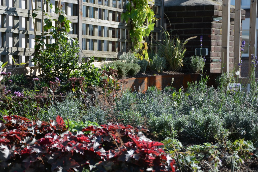 Christina Fuchs rooftop garden