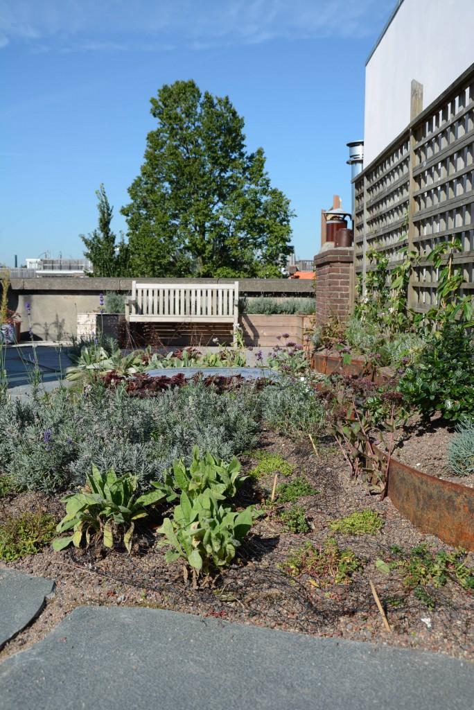 Christina Fuchs rooftop garden Amsterdam